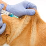 Common side effects for dog vaccines include a slight fever, sluggishness, vomiting or diarrhea, loss of appetite, and swelling or pain near the injection site.