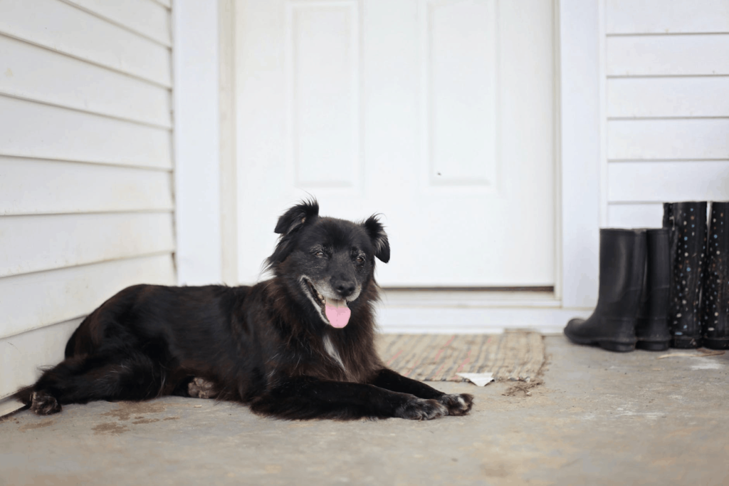 Happy black border collie sits on porch. Dogs during quarantine: Try to keep your dog's routine as normal as possible. Practice social distancing during walks, maintain nutrition, and stay home.