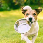7 reasons to avoid dry dog food