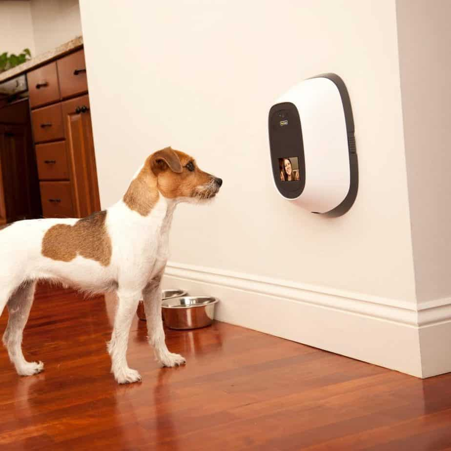 Petchatz dog treat camera. When looking for treat-dispensing cameras, extra attention to video quality is important.