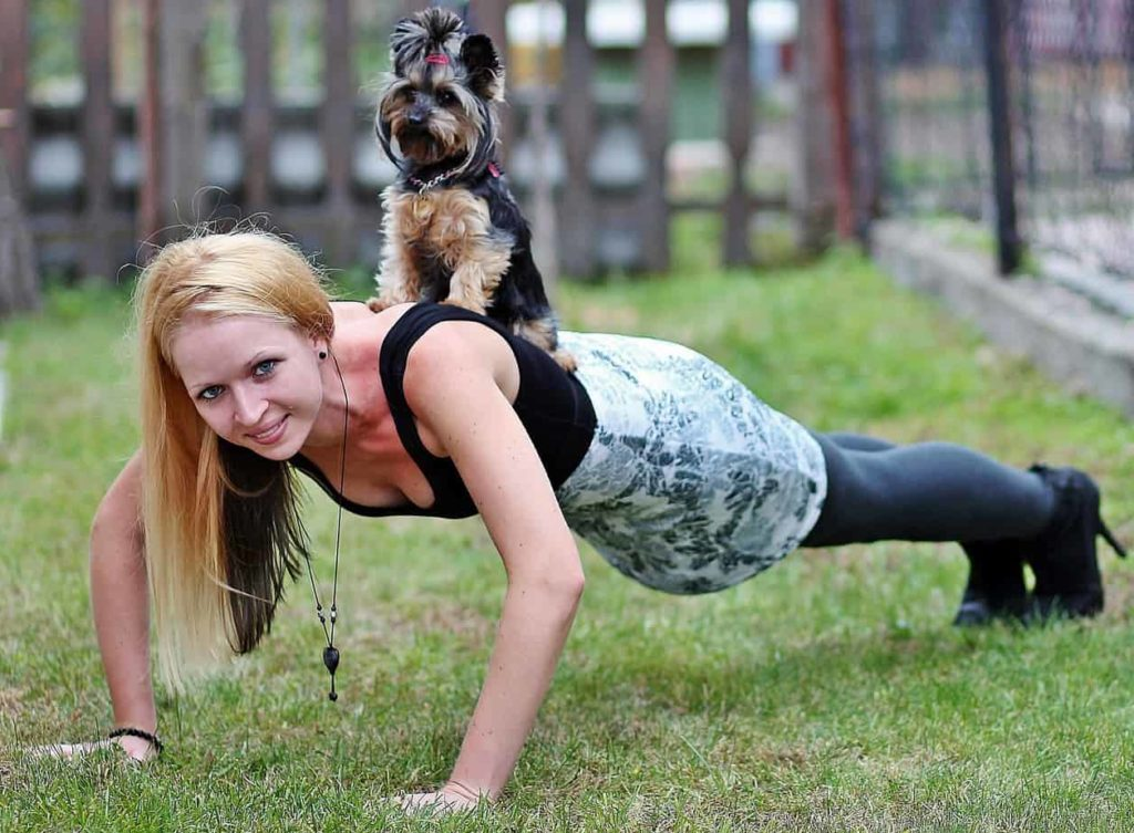 Woman illustrates pushup with Yorkie sitting on her back. A daily dog walk plus a workout with your dog at home is the best way to maintain your shape. Use toys or treats to get your dog involved.