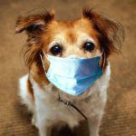 Canines are unlikely to catch or transmit the coronavirus to people or other animals.