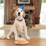 Plan an epic dog birthday party to celebrate your dog's special day. Invite your human friends and favorite dogs to join the celebration.