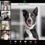 Dogs and other pets on a video conference call. Dog home alone again? If you're preparing to go back to work, get your dog ready. To prevent separation anxiety, use training, treats, and a safe space.