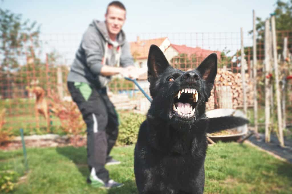 Man trains aggressive black German shepherd dog. Train a dog not to bite: Watch for behavior changes, redirect puppy bites, and reduce frustration with exercise, and mental stimulation.