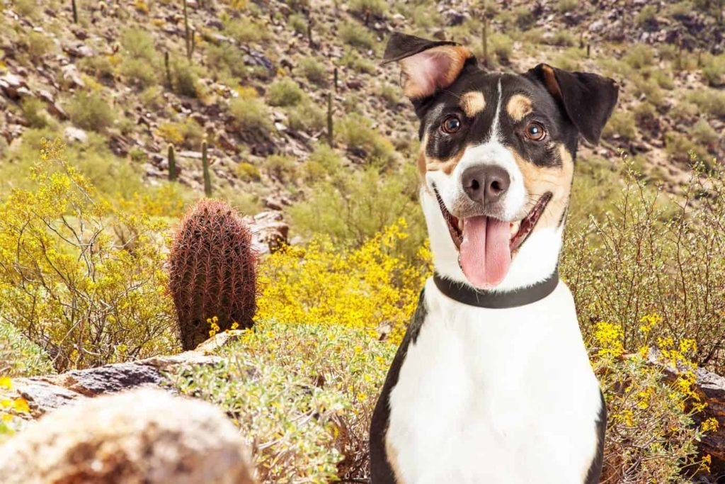 When hiking with your dog be sure to protect your pet from a wild animal bite.