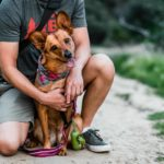 Happy dog on a hike with his owner. Pet foster parents help dogs feel loved and cared for, even if it is temporary until they find their forever home.