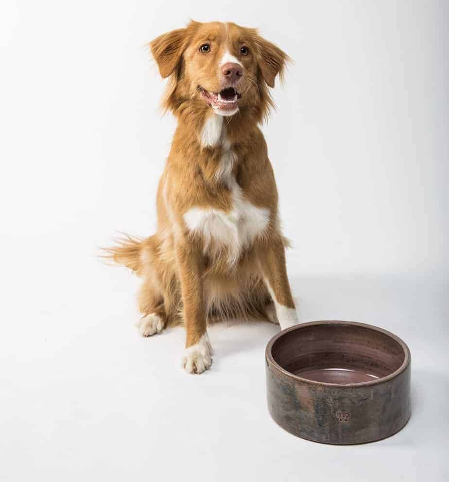 Happy border collie waits by food bowl. When choosing dog food, start off by considering both your dog's dietary and health needs and your budget.