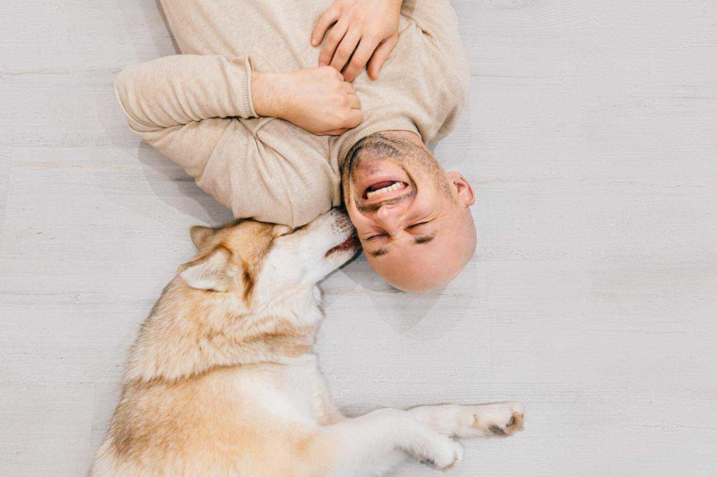 Husky kisses owner. To make your dog happier, find ways to spend more time with your dog.