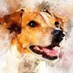 Painted portrait of Jack Russell Terrier. Immortalize your pet with something special like a portrait, a donation to an animal shelter, a tree planted in their honor, or a tattoo.