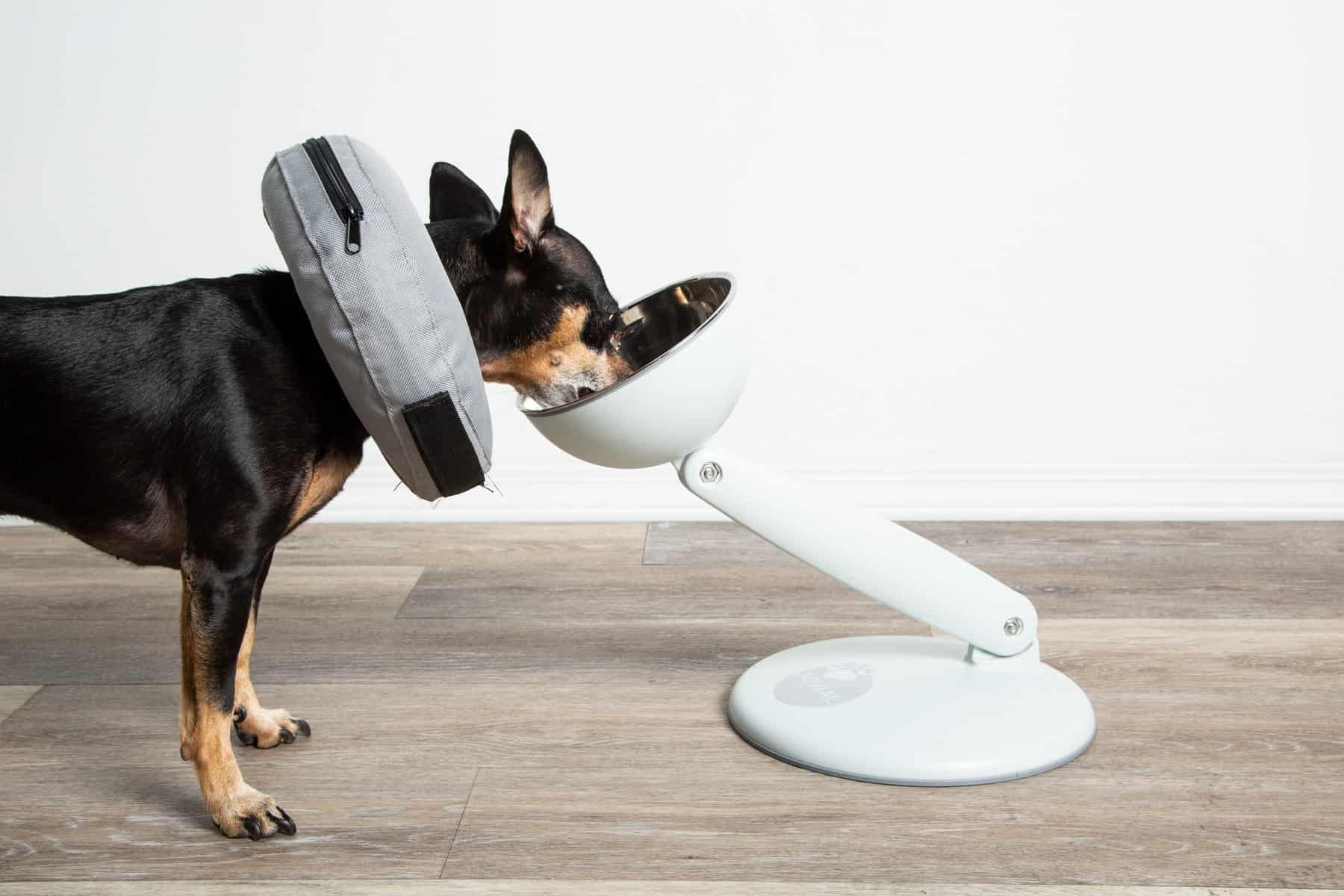 Dog wearing a cone eats from an elevated JoviBowl.