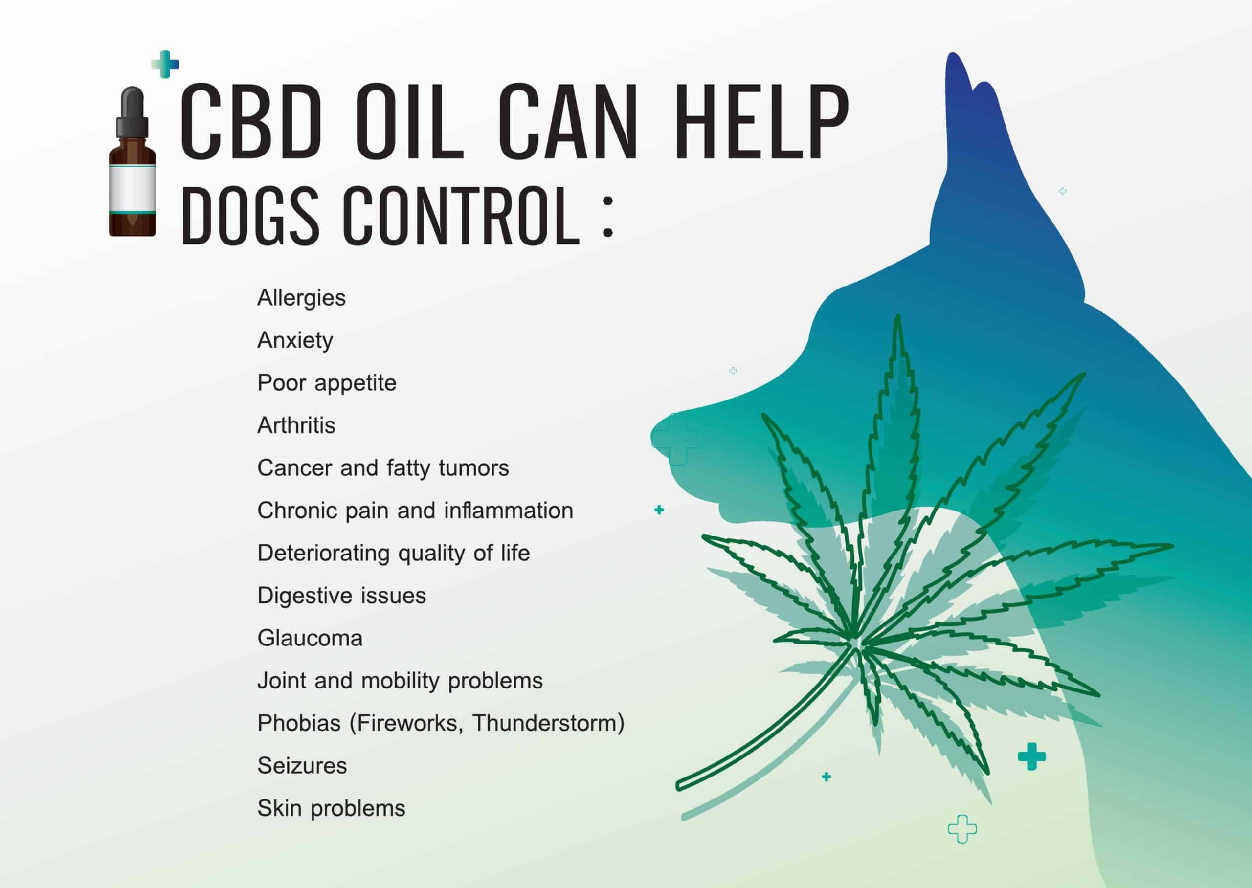 CBD supplements graphic explains benefits for dogs.