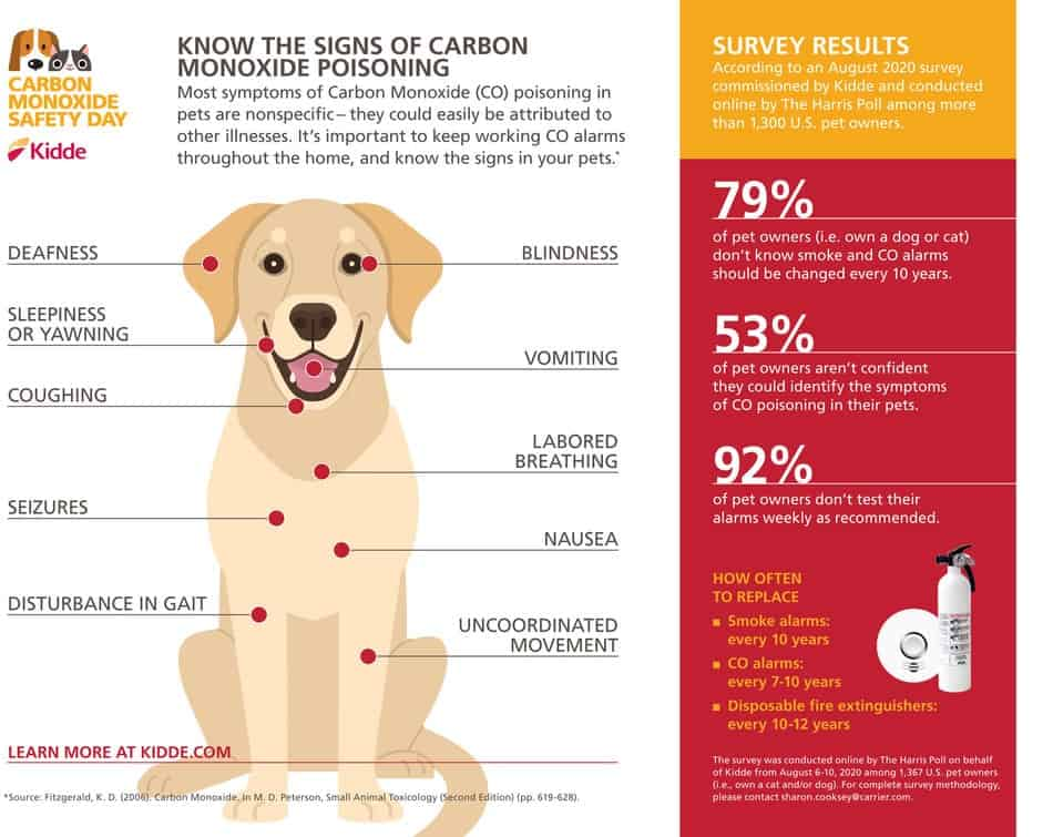 carbon monoxide poisoning in dogs graphic