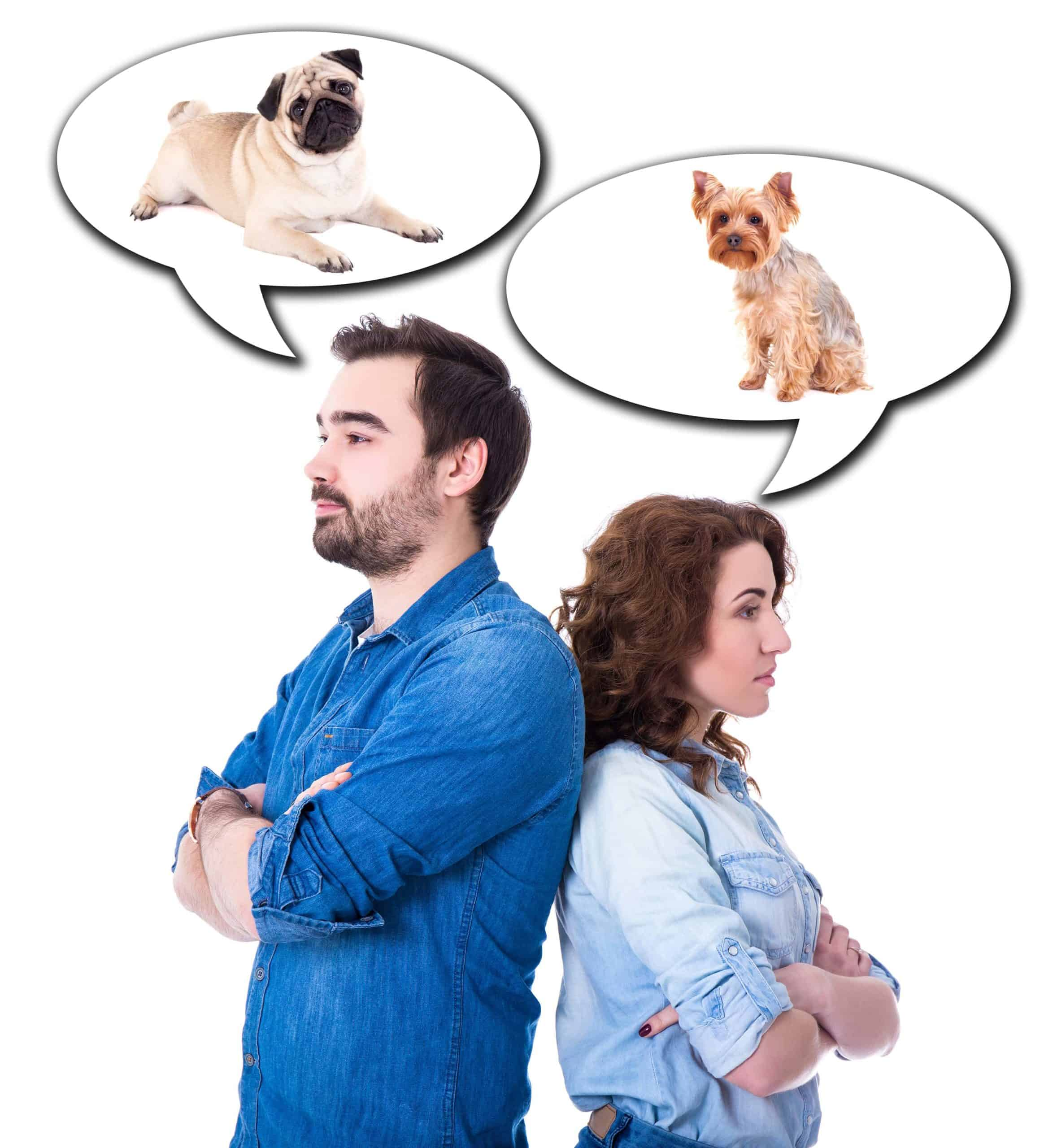 Young couple argues about dogs in photo illustration. When crafting a dog custody agreement, consider who has the most space and time to provide the best care for your dog.