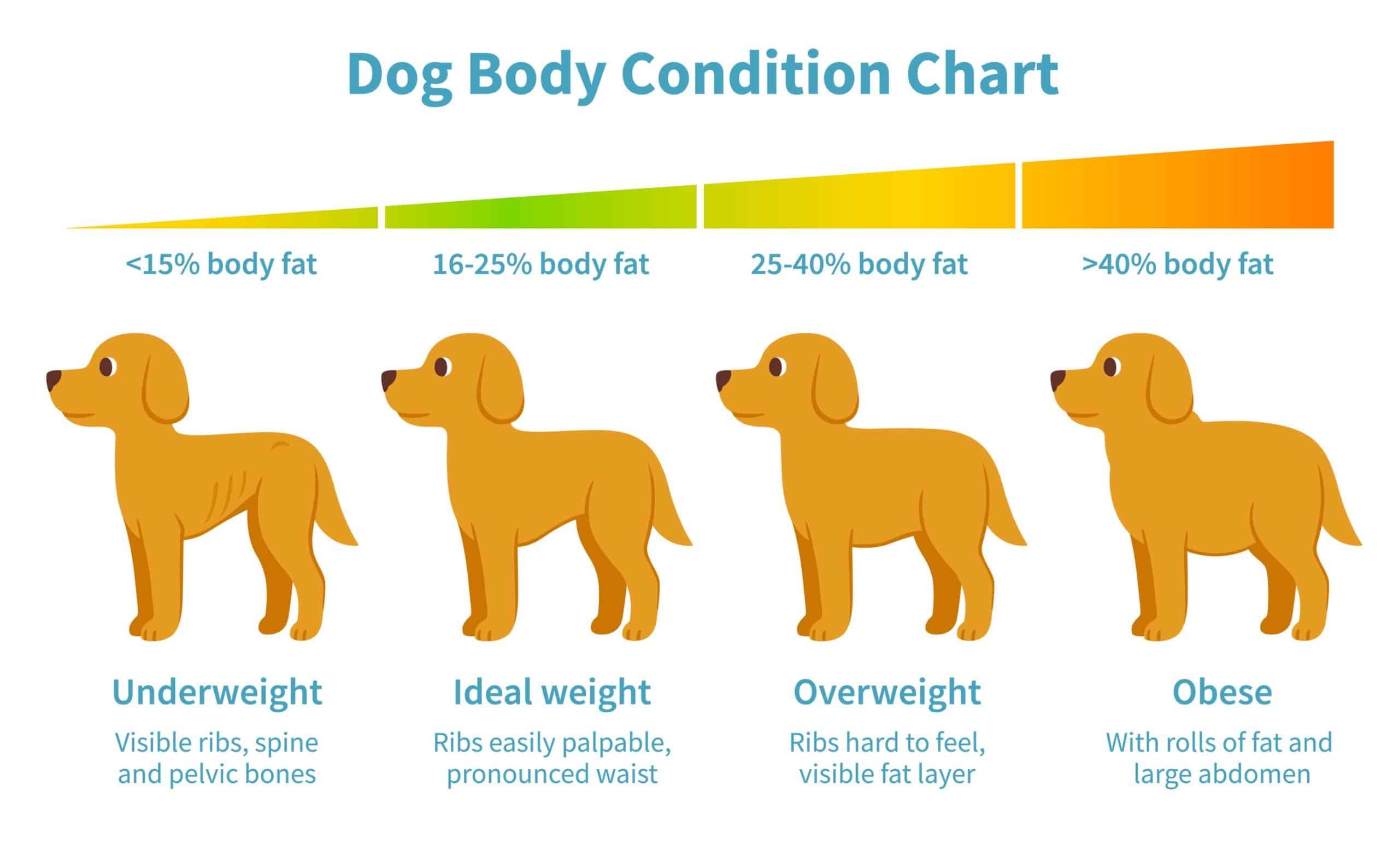 Chart illustrates weight ranges for dogs. Work with your vet to help your rescue dog gain weight. Feed your pup high-calorie, healthy dog food with supplements as needed.