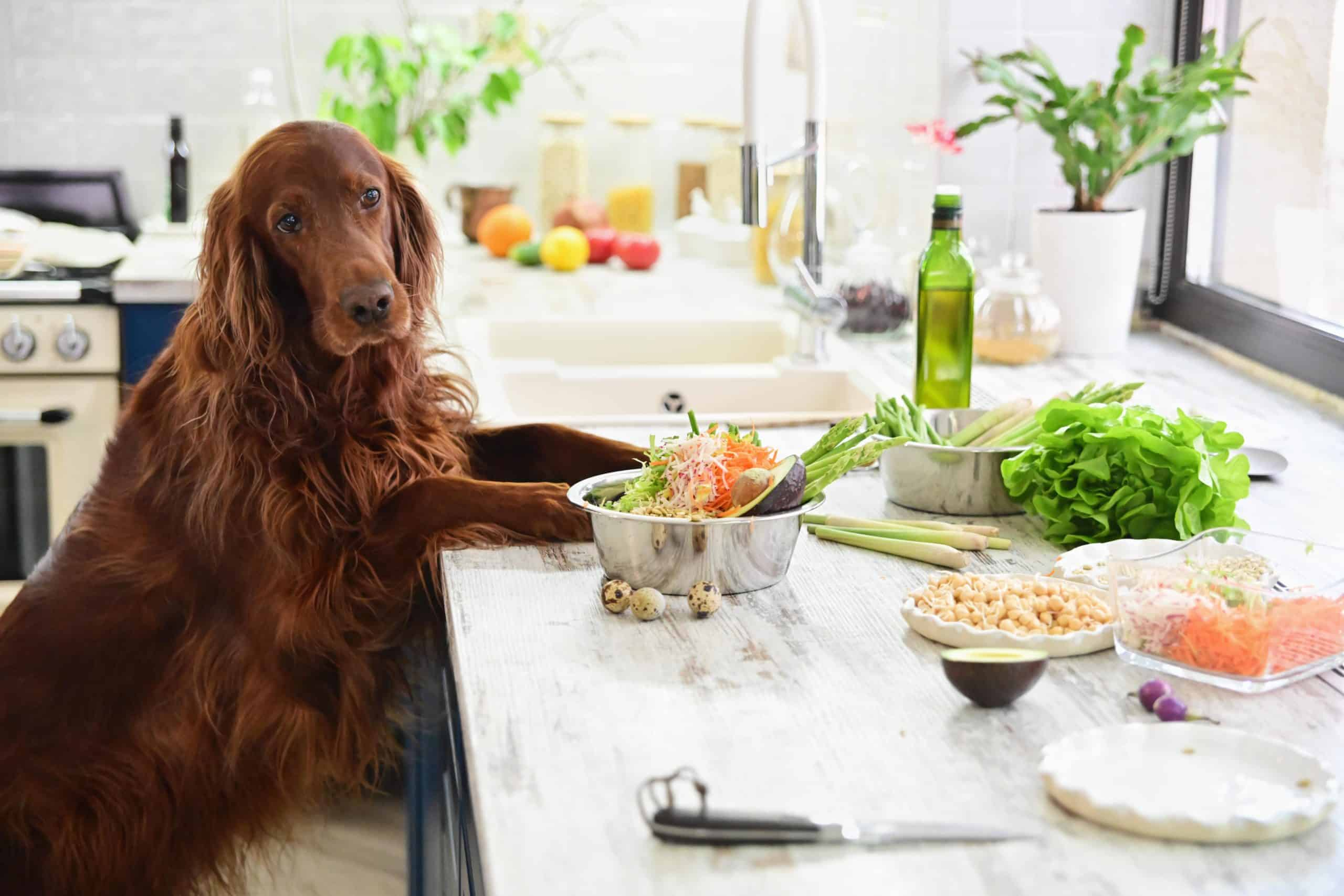 Irish Setter pictured with food ingredients. If you have time, make homemade dog food cooked in a clean environment, using high-quality, fresh ingredients.