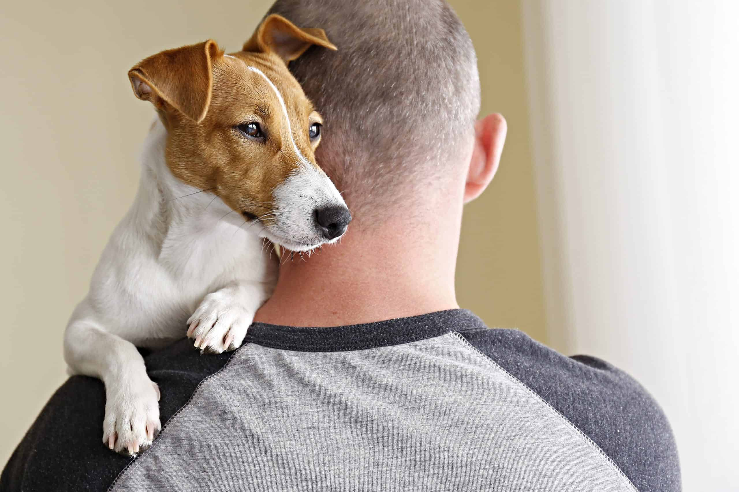 Man cuddles Jack Russell Terrier. If your doctor determines you qualify, he'll write a letter or ESA certificate to recognize your dog as an emotional support companion.