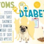 Diabetes mellitus in dogs is caused by impaired insulin secretion of the pancreas, insulin resistance failure, or both.