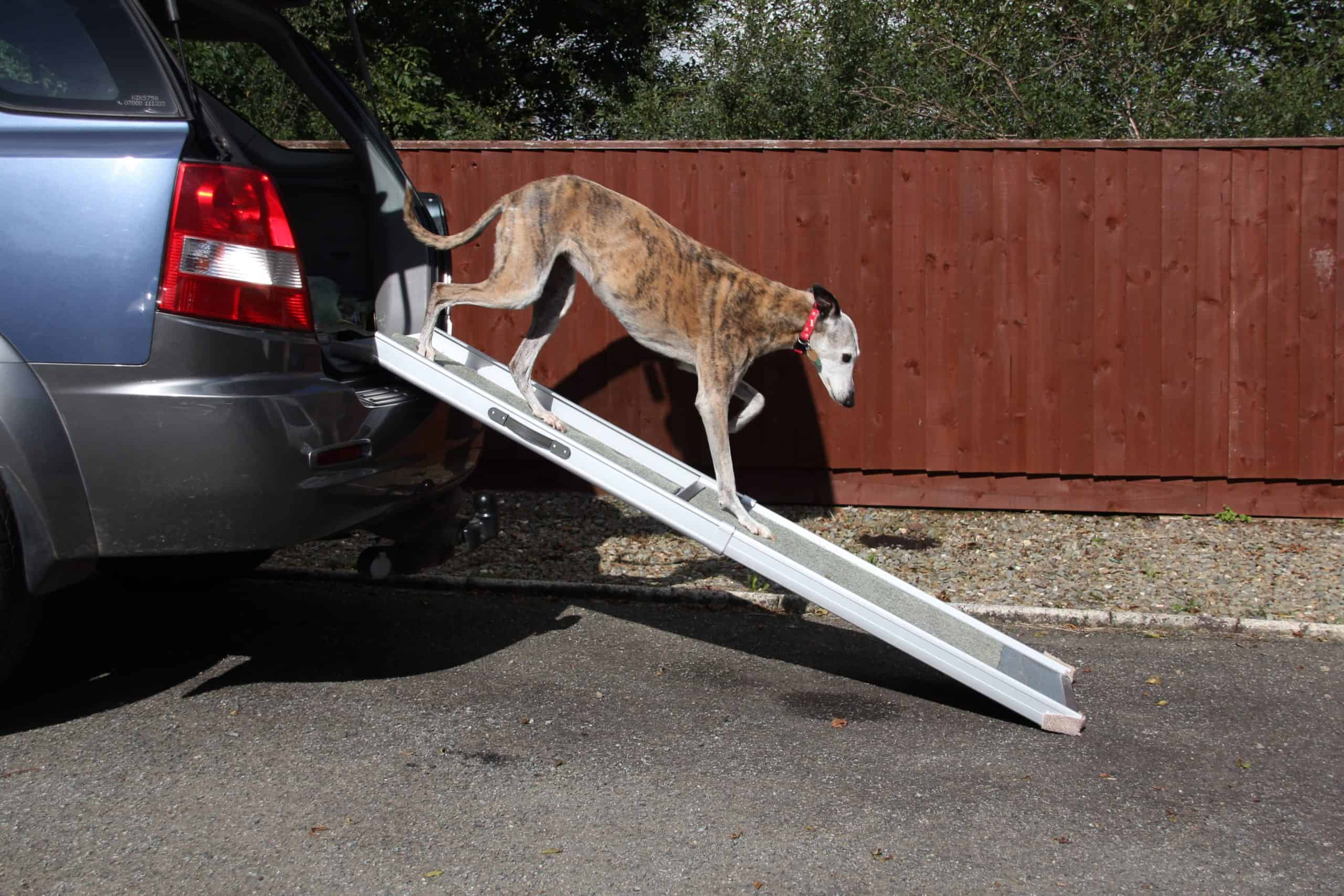 Saluki uses a dog ramp. Some vehicles are too high for your pets to jump, it is also unsafe to lift big dogs, or you will end up frightening or startling them. A dog ramp is a safer option to help your dog easily climb in and out of your vehicle with no problem.