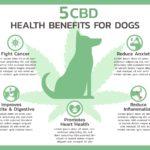 Pet CBD health benefits graphic