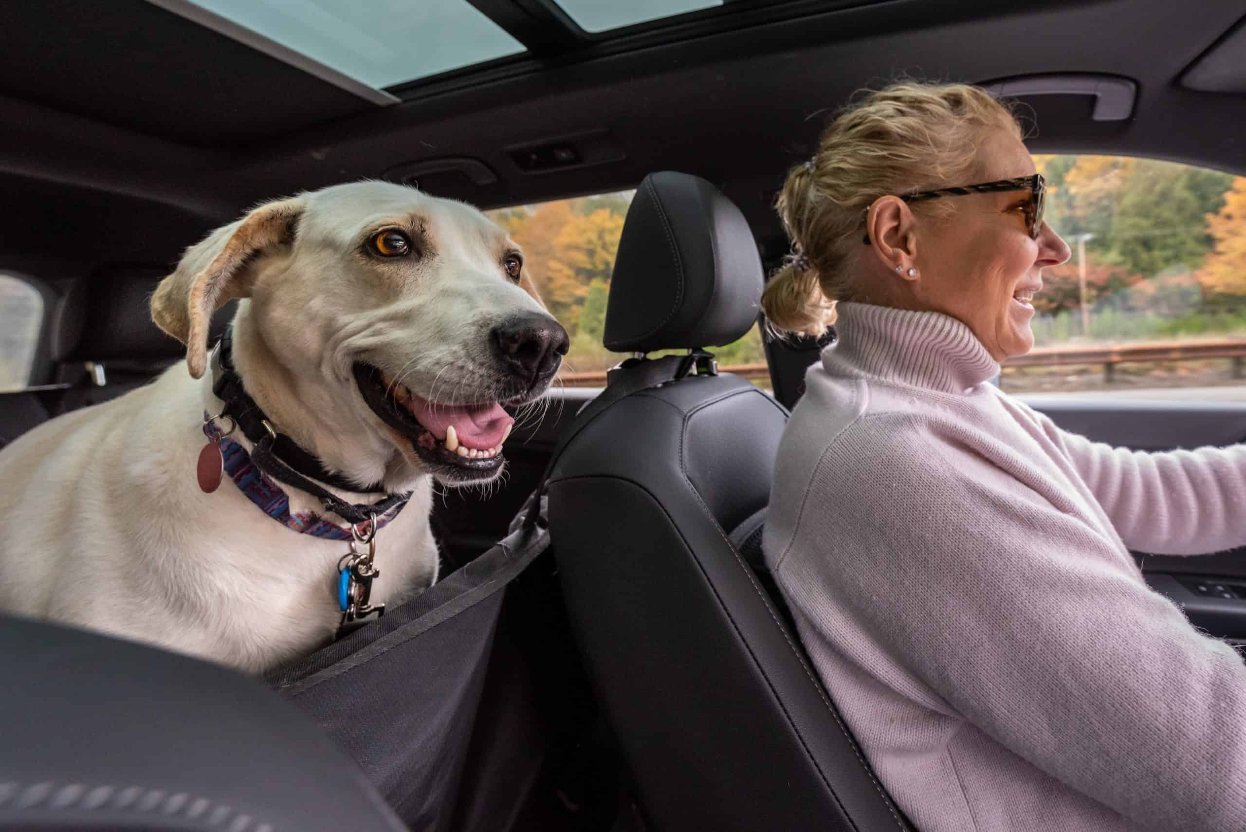 Blond woman drives with Labrador Retriever secured in backseat with protective seat cover. Use car accessories for dogs to keep your pup safe and comfortable whether you're going for a short drive or a road trip.