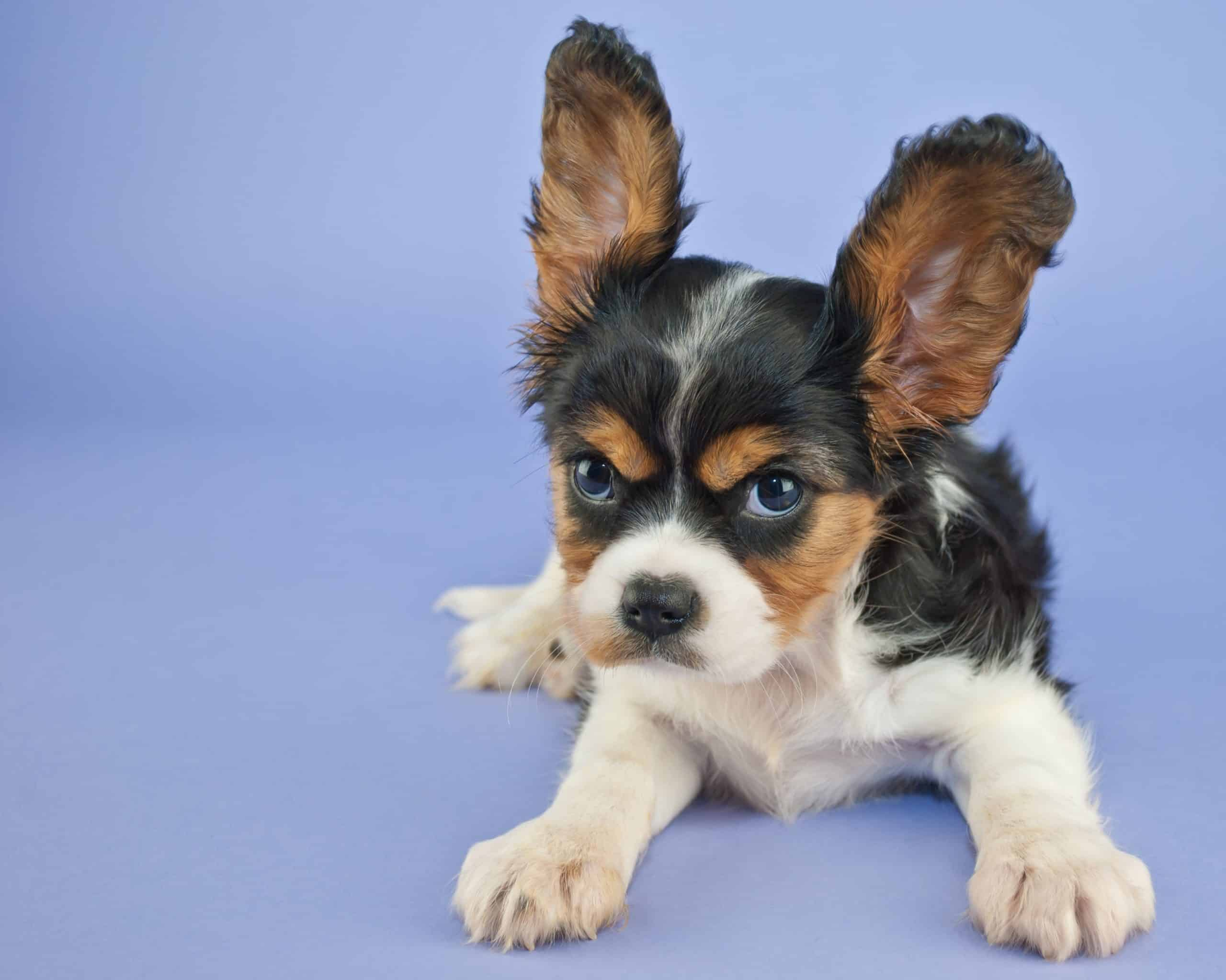 Photo illustration of an aggressive puppy. The most common aggressive puppy warning warning signs to watch for in your puppy's behaviors include snarling, growling, mounting, snapping, nipping, lip curling, lunging, dominance, challenging stance, dead-eye stare, aggressive barking, possessiveness, and of course, biting!