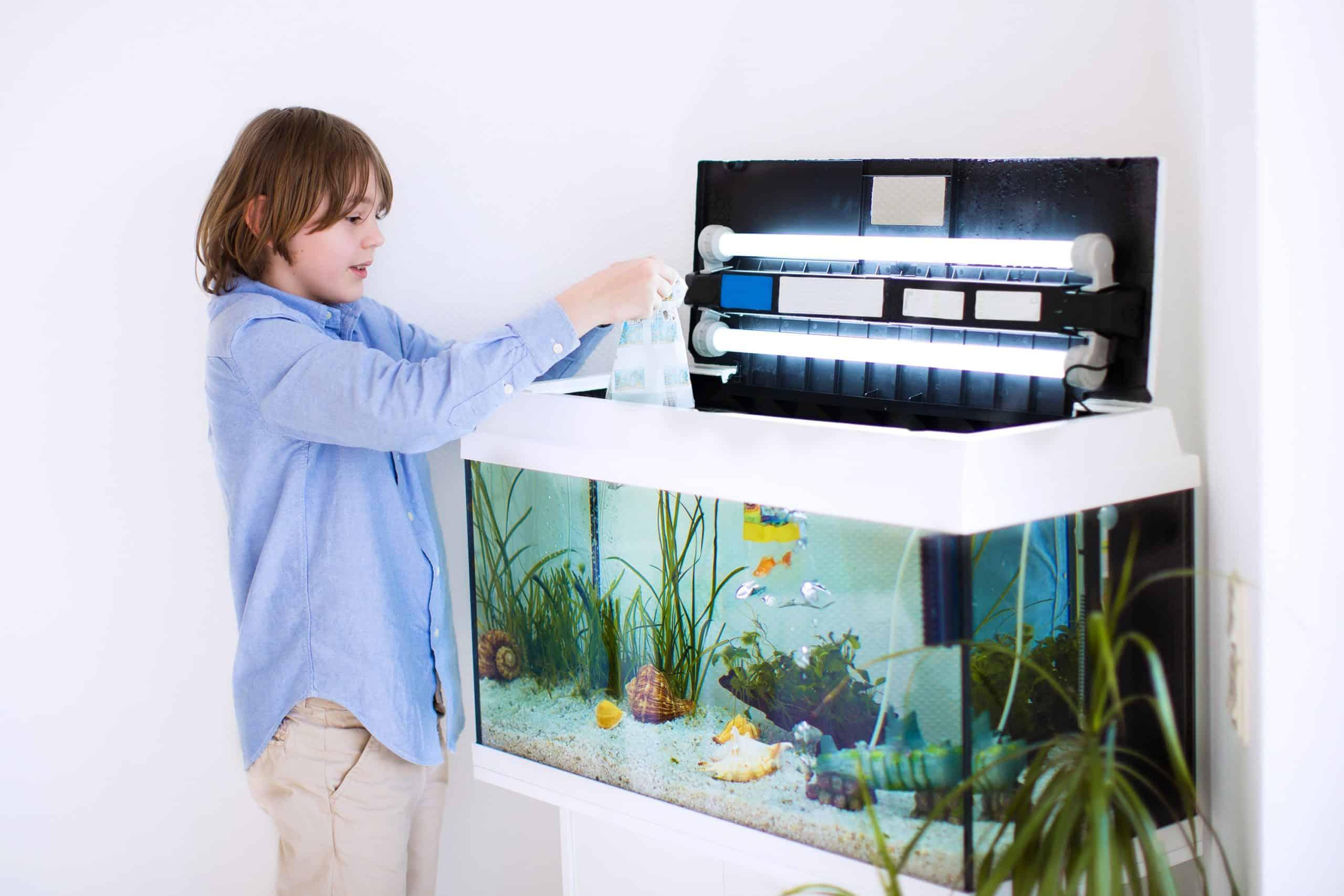 Boy adds fish to aquarium.