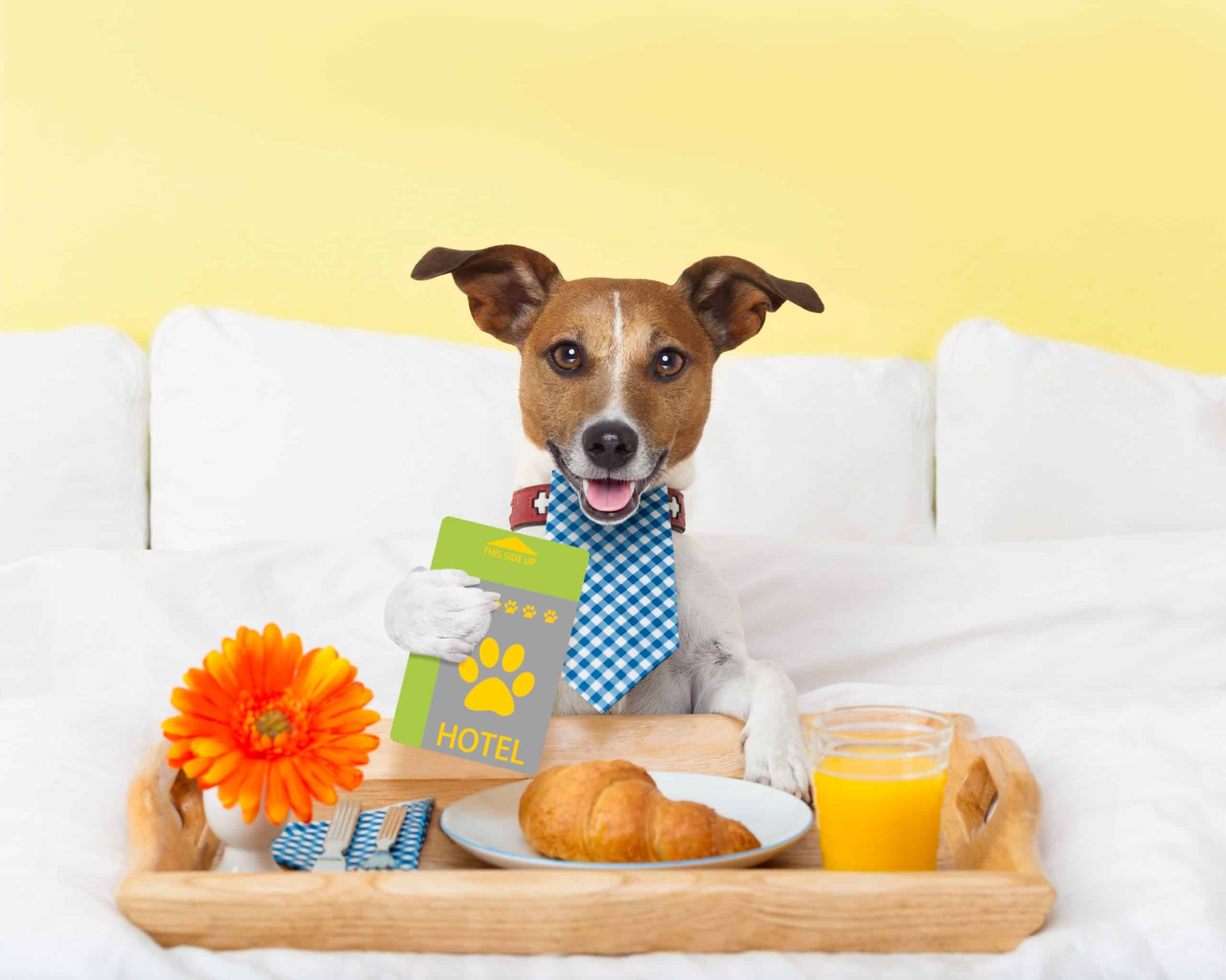 Photo illustration of dog at hotel. Pamper your pup with luxury hotel treats and services for the ultimate dog-friendly holiday.