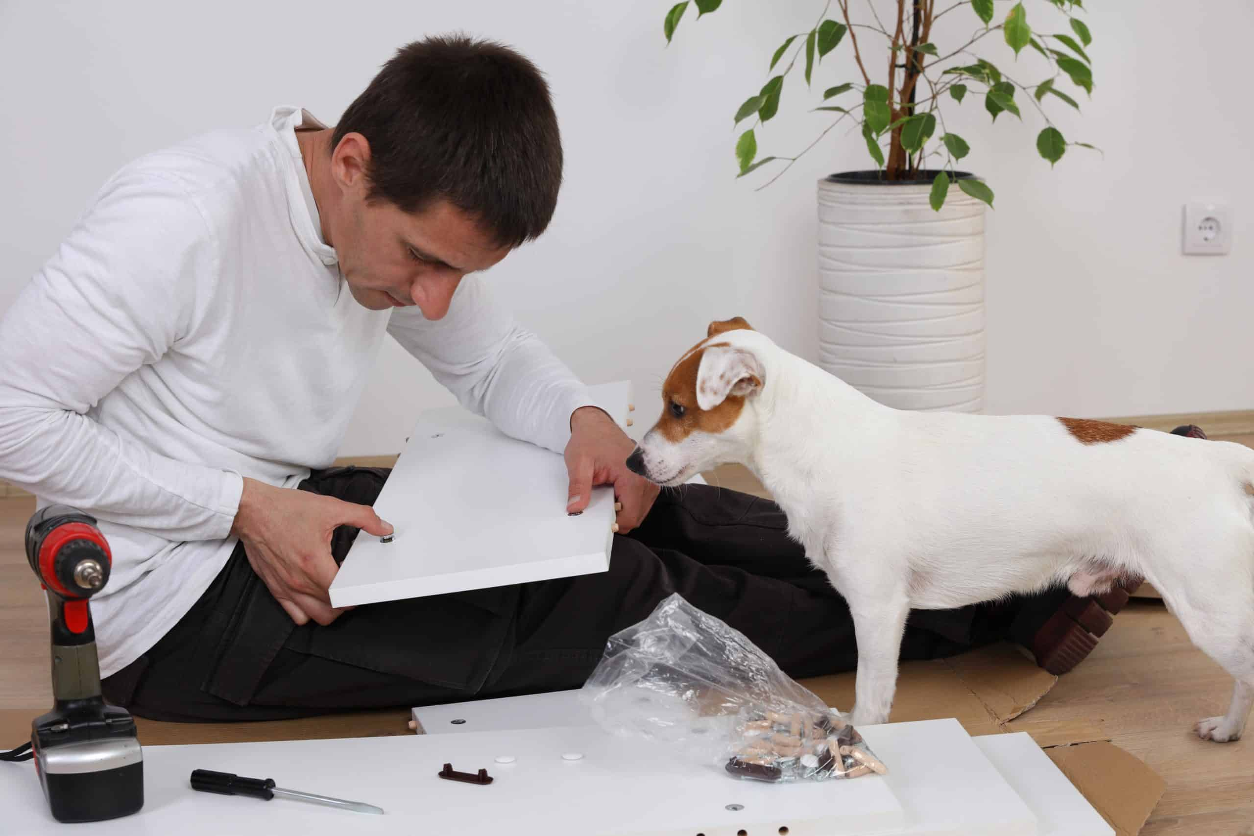 Jack Russell terrier watches while man does home repairs. Making home upgrades to help dogs don't have to be overly complicated. Consider what's best for their health and safety.