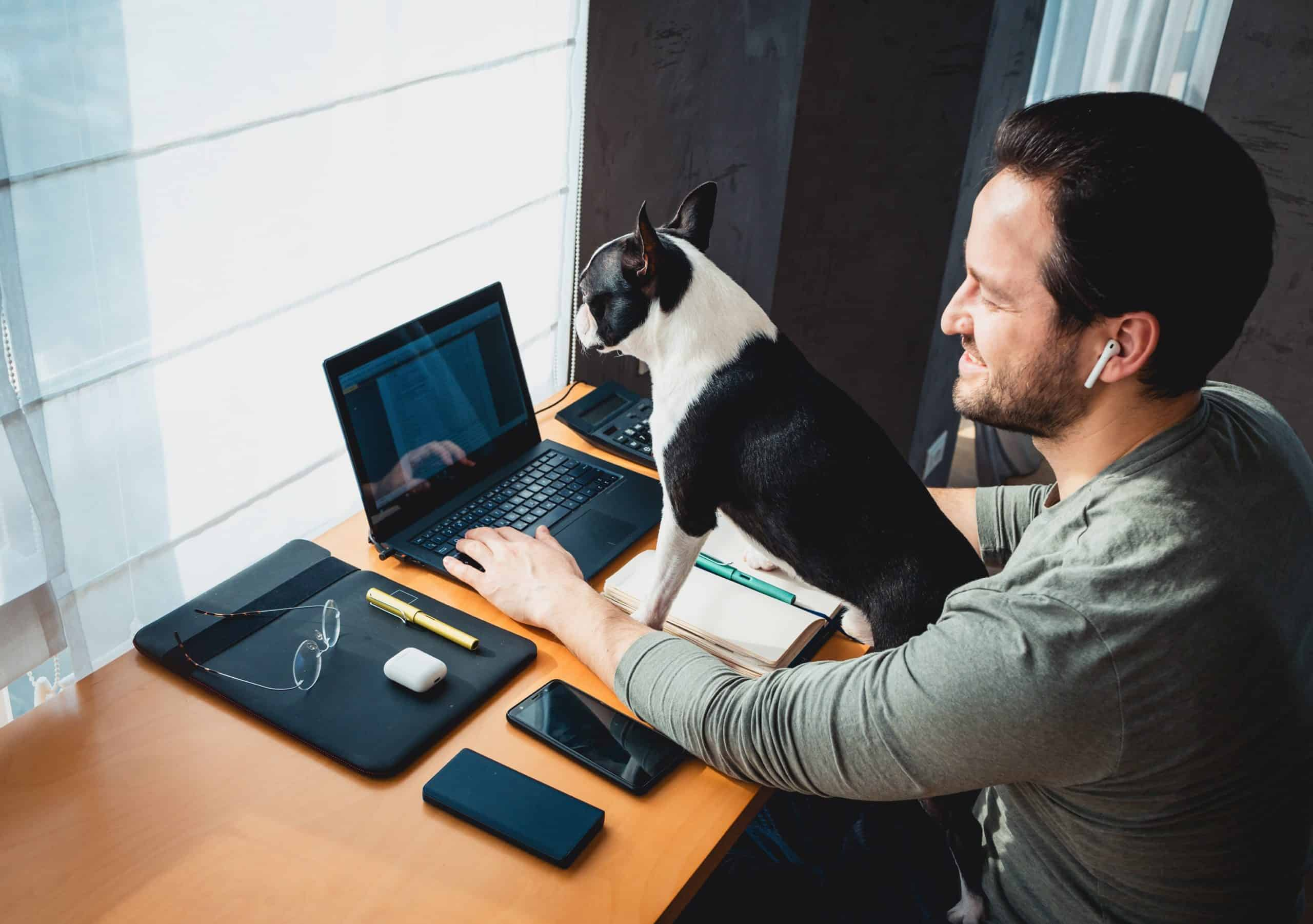 Man holds Frenchie while working from from home.