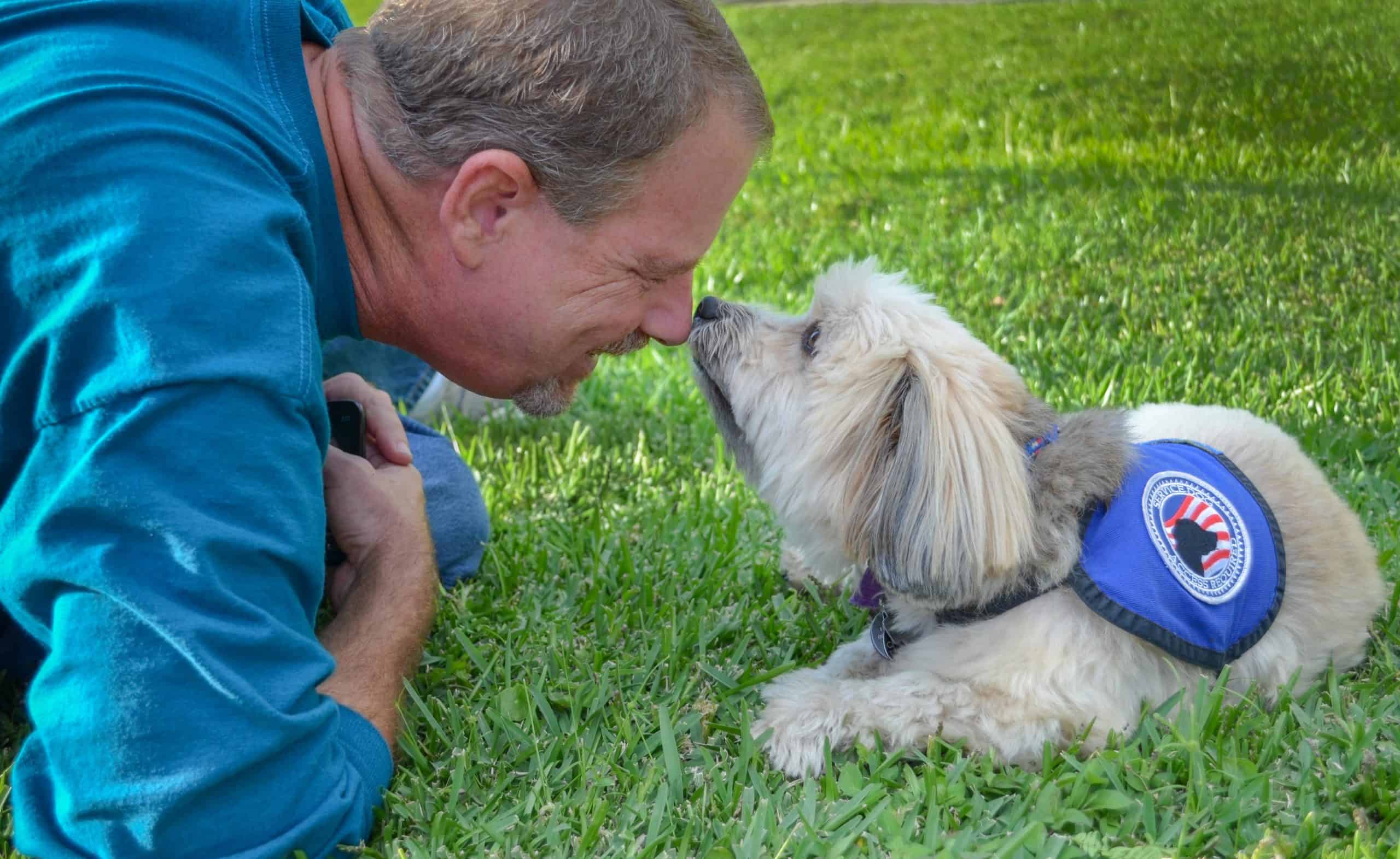 Man interacts with Shih Tzu service dog. A service dog helps prevent a disability from interfering with everyday life.