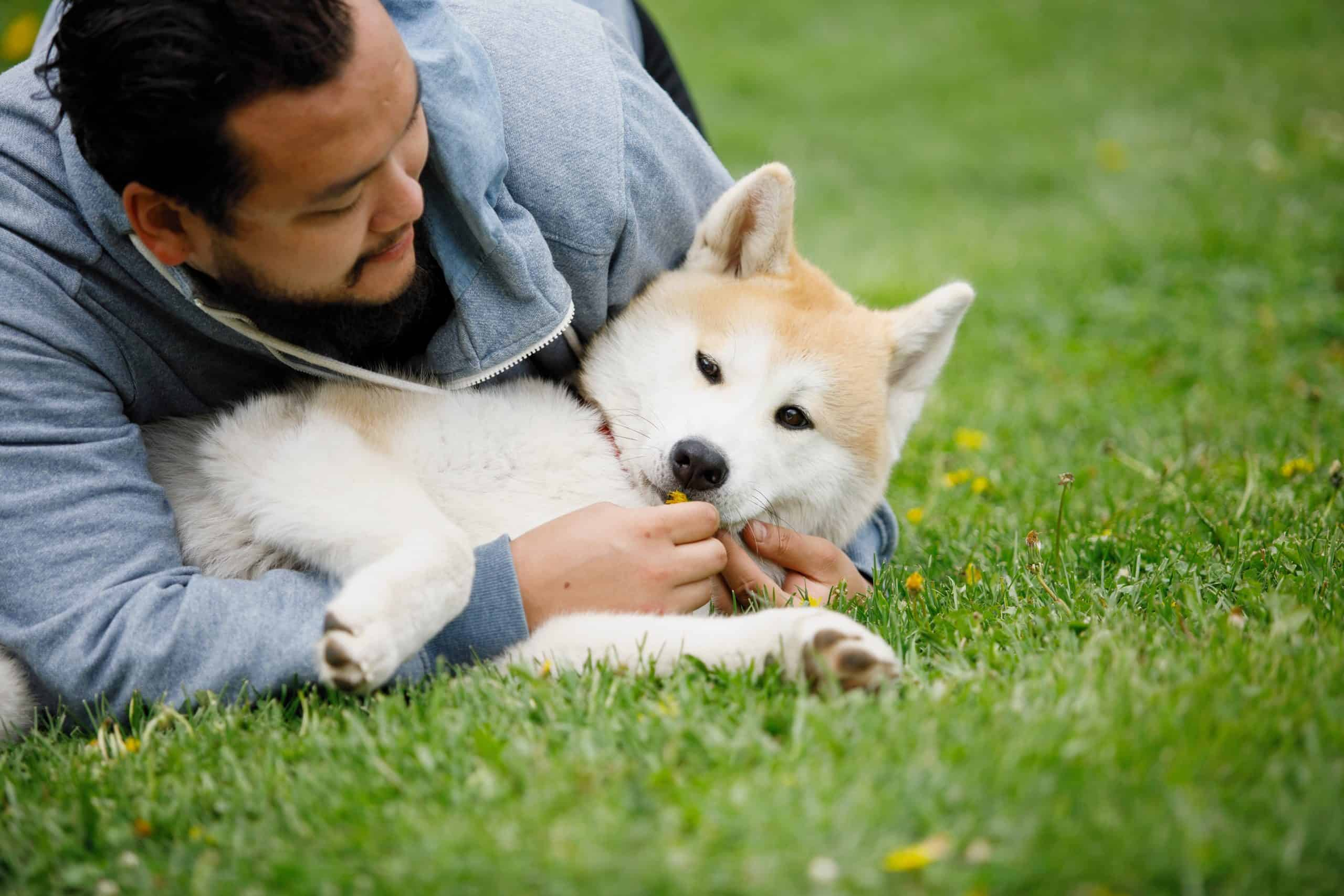 Man cuddles with Akita. Like their dogs, Akita owners will be faithful.