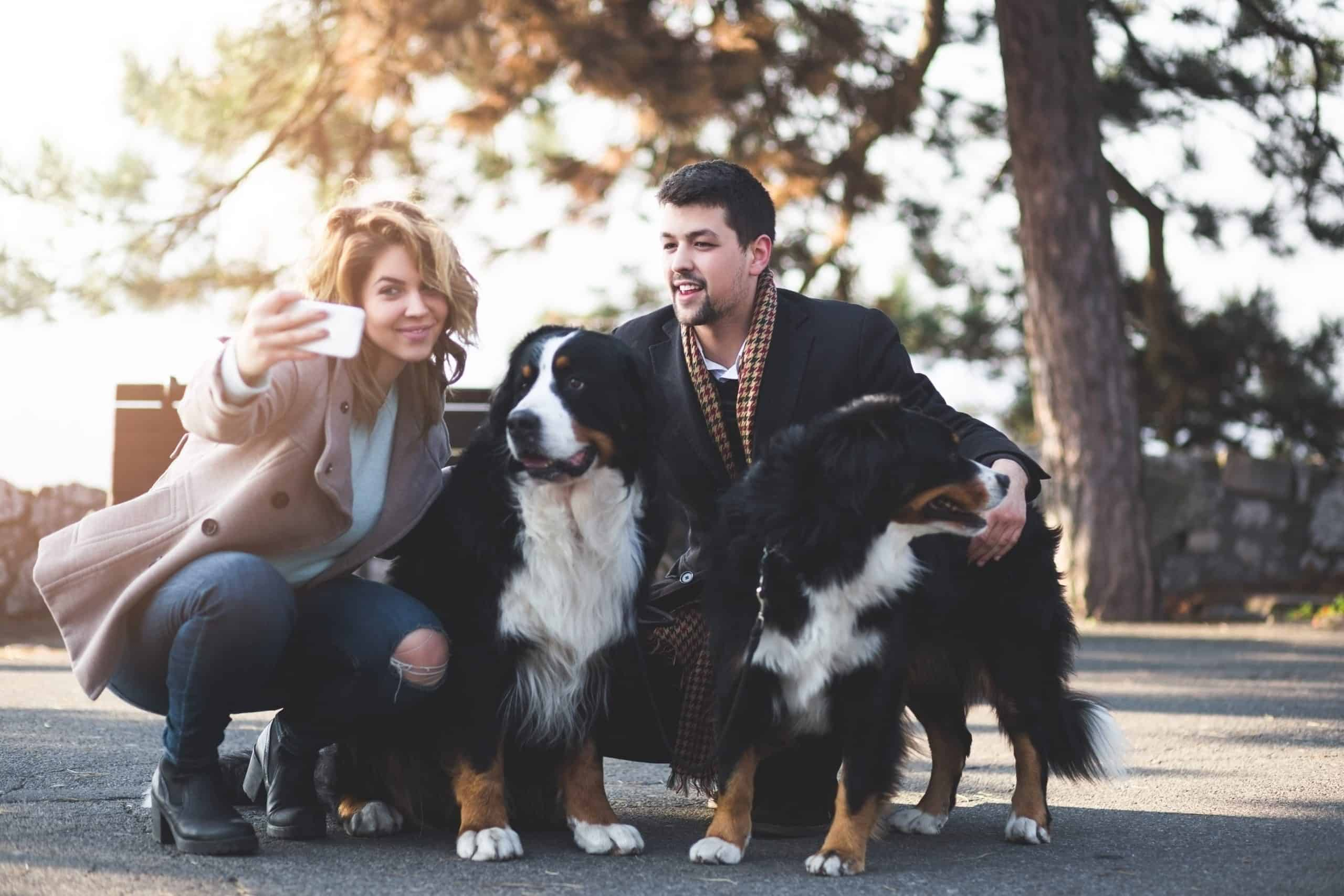 Couple poses for selfie with pair of Bernese Mountain Dogs. Like their dogs, Bernese Mountain Dog owners are friendly and enjoy meeting new people and dogs.