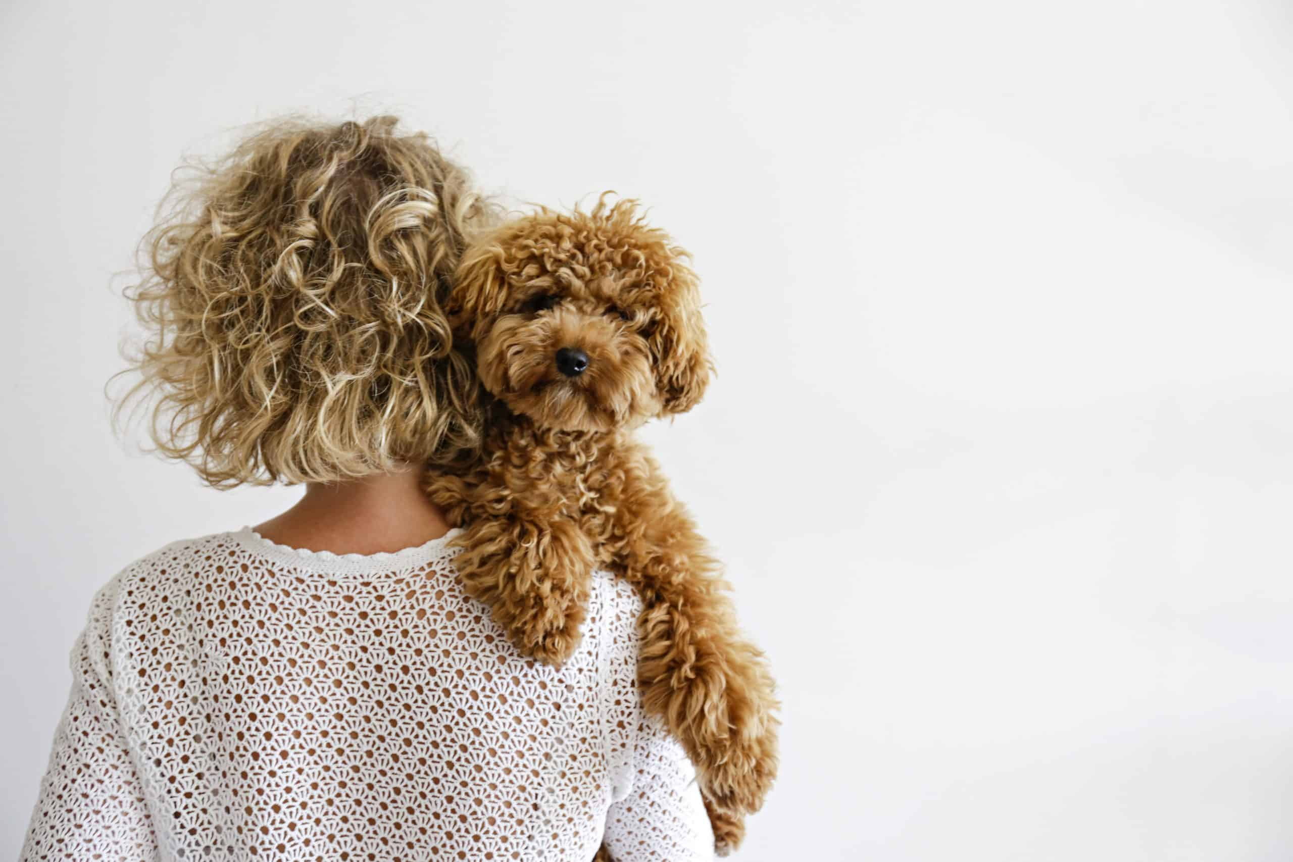 Woman with curly hair cuddles poodle mix puppy. Want to understand your (potential) partner's character? The dog breed he chooses reveals key personality traits.