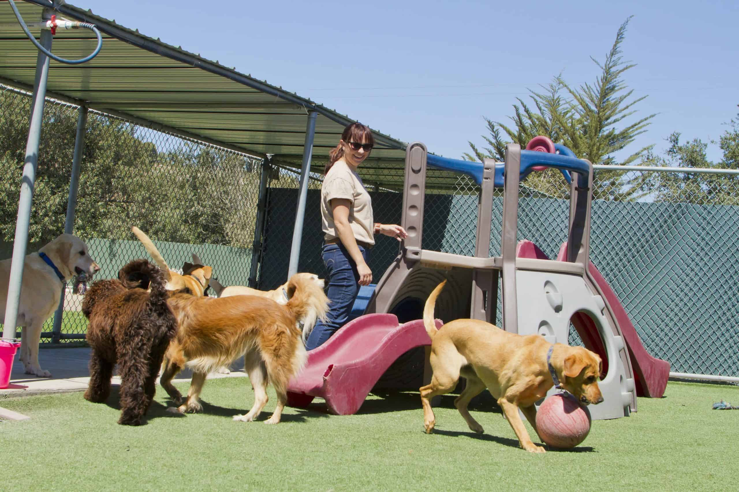 Dogs play at doggie daycare. Dogs are very social by nature and like being around both humans and other pets. So whether you have a friendly puppy or a rather reserved dog, doggie daycares are an excellent way to enhance your companion's social skills.