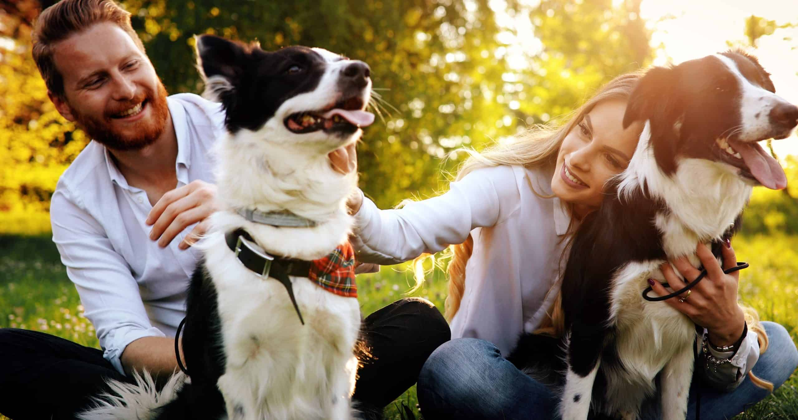 Couple plays with their border collies. Spending time with your dog provides opportunities to meet other people with similar interests.
