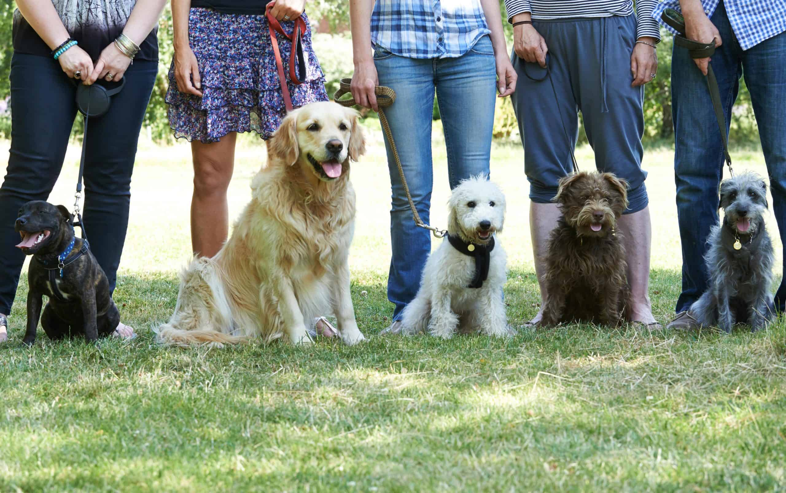 Dog owners pose with their dogs. Joining a local community for dogs is a great way to meet new people.