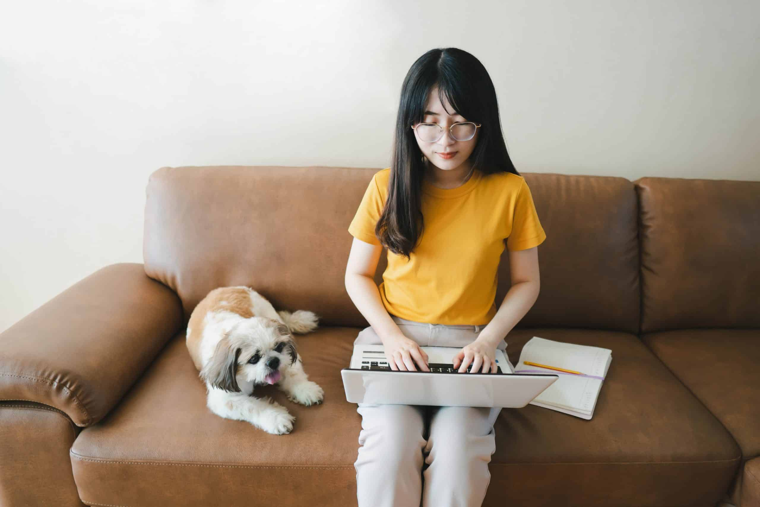 Woman sits on couch studying with her Shihi Tzu. Bringing your dog to college helps you get better grades by making you set a schedule and be more responsible.