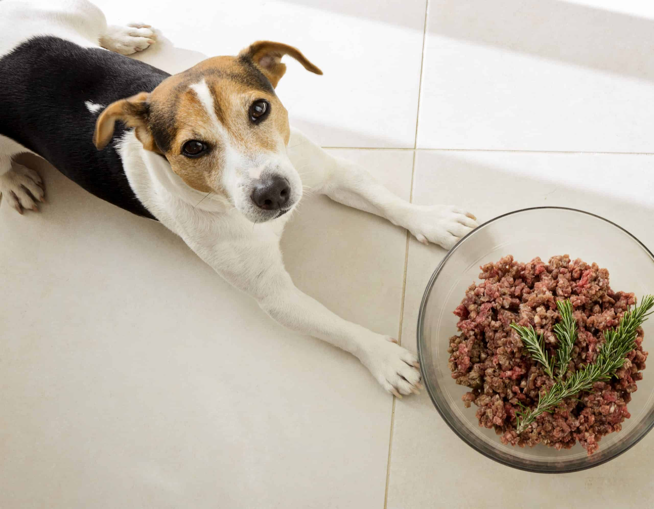 Dog sits next to food bowl with thyme resting on top of food. Thyme helps improve digestion, supports gastrointestinal health, and can expel parasites like hookworms. It also is good for your dog's skin and can help improve brain function. Just add a teaspoon of either the dried or fresh herb per pound fed to your dog's food.