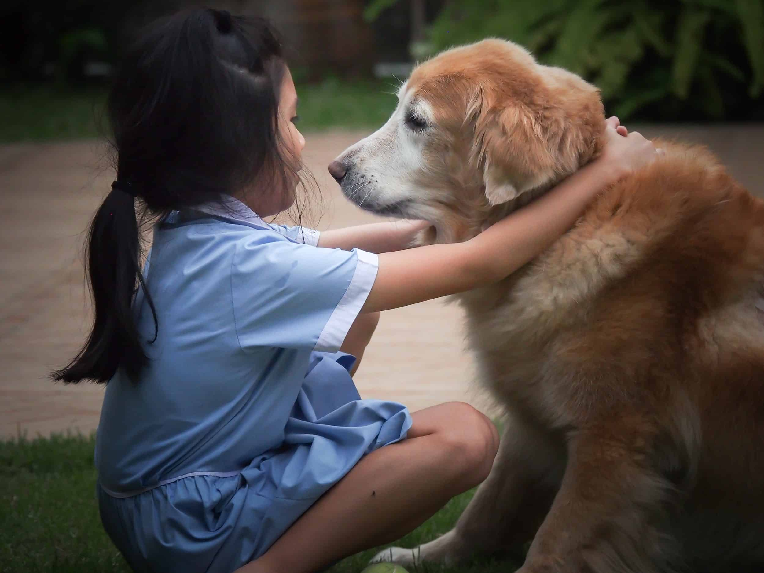 Young girl with old golden retriever. For many children, the loss of a pet is their first life experience of loss or death.