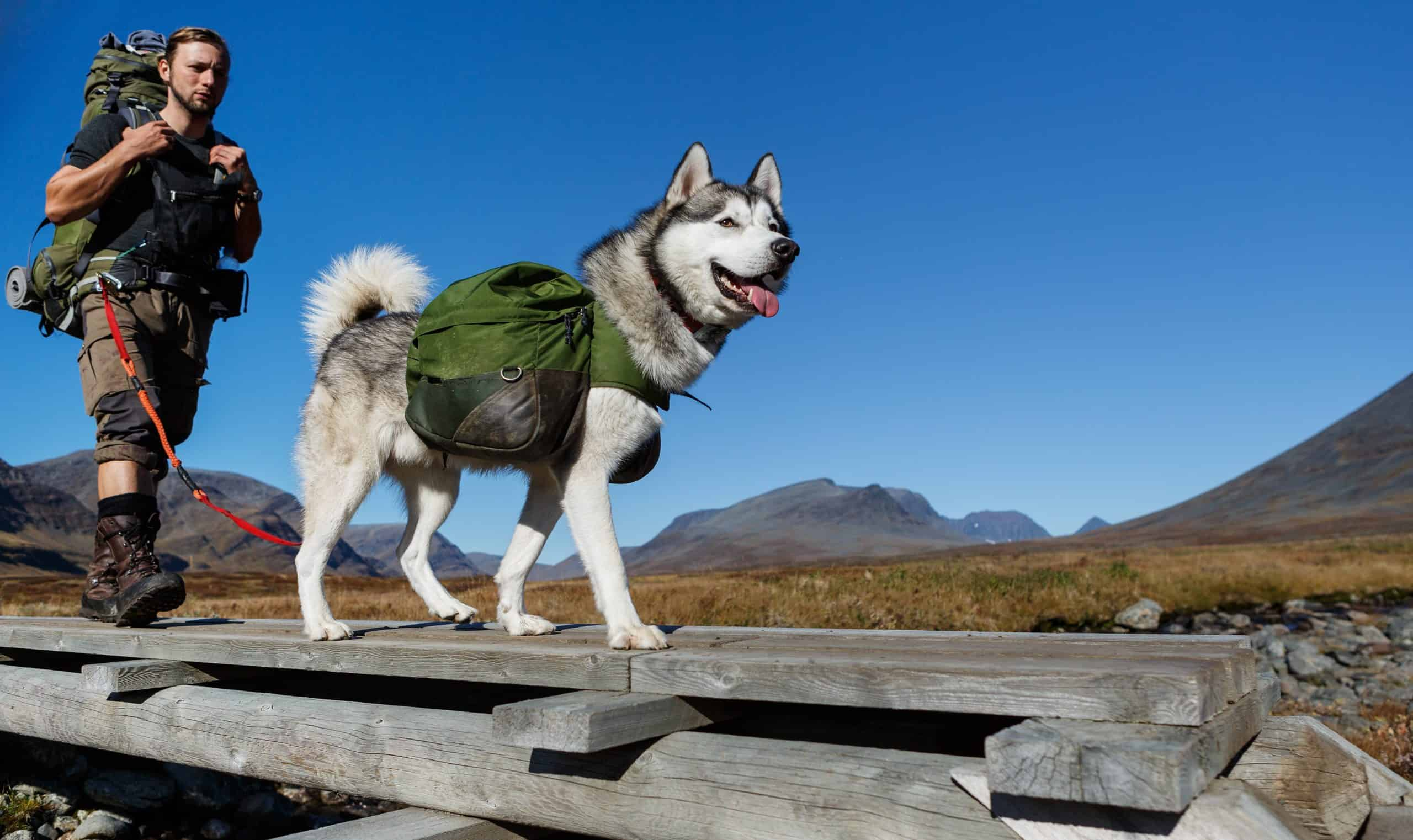 Man trekking with dog wearing a backpack.