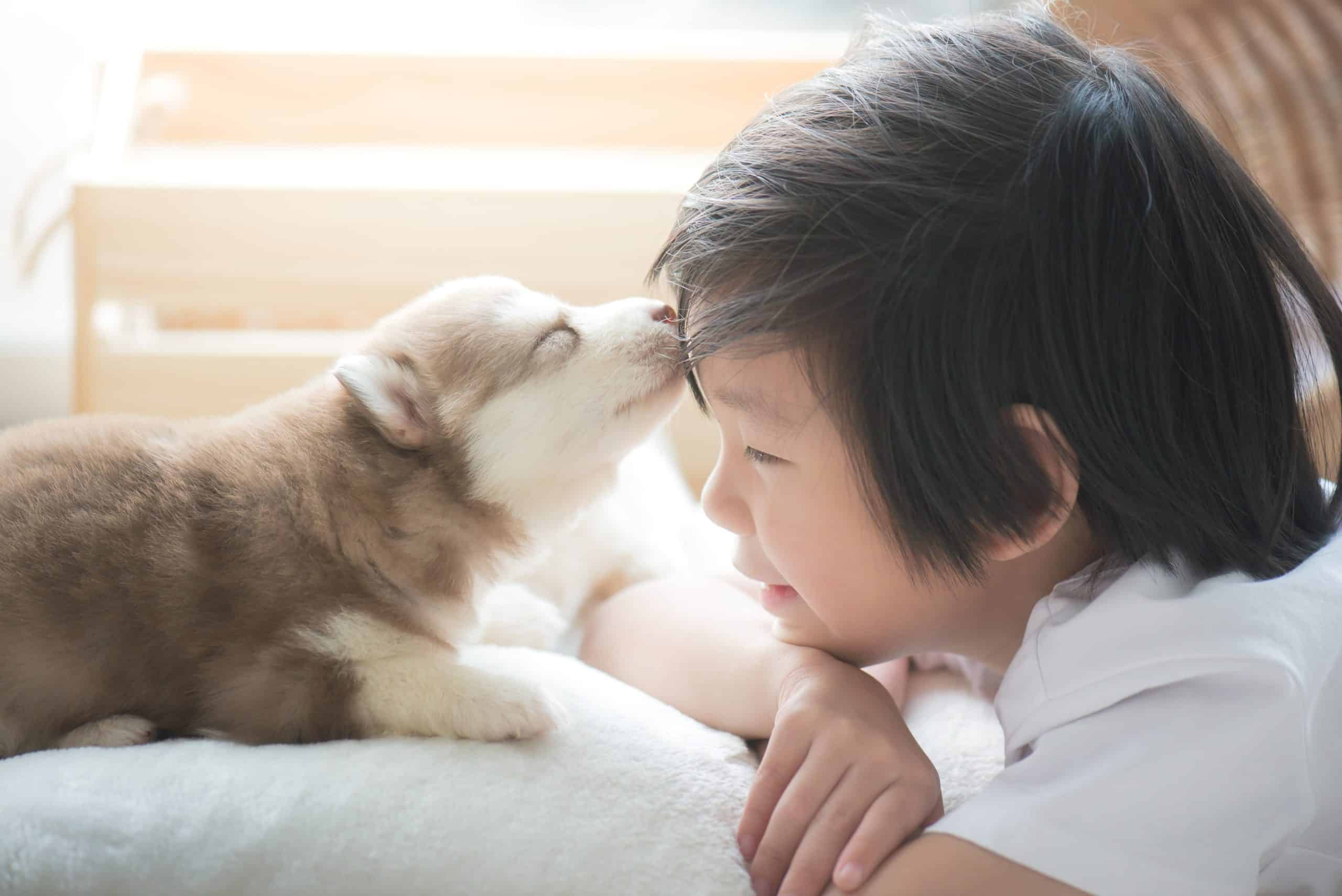 Husky puppy kisses little boy. When you get a child a dog, be sure to supervise all interactions to keep both puppies and children safe.