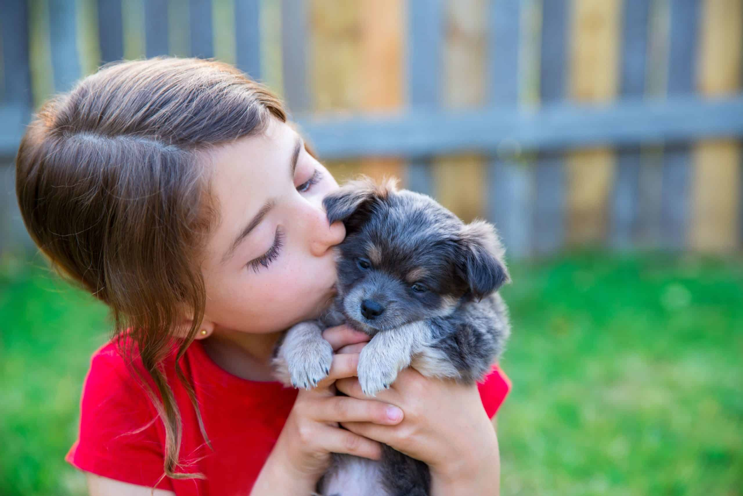 Little girl kisses Schnauzer puppy. Teach children to respect your dog's boundaries and to never interrupt them when they are eating or sleeping.