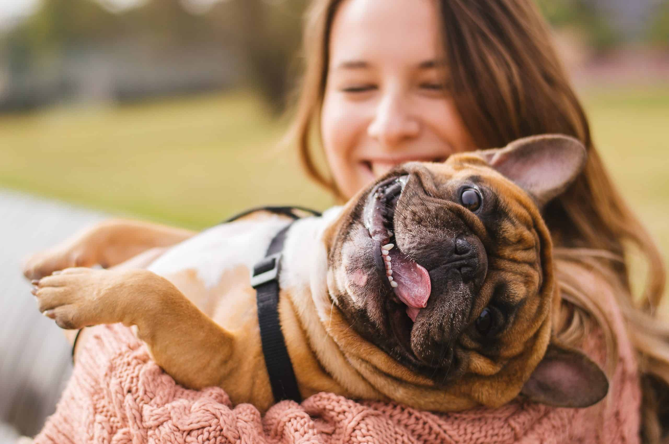 Laughing woman holds French bulldog. As a new dog owner, purchase the supplies that your dog may need for his daily life, such as dog toys, comfortable bedding, a grooming kit, and dog food.