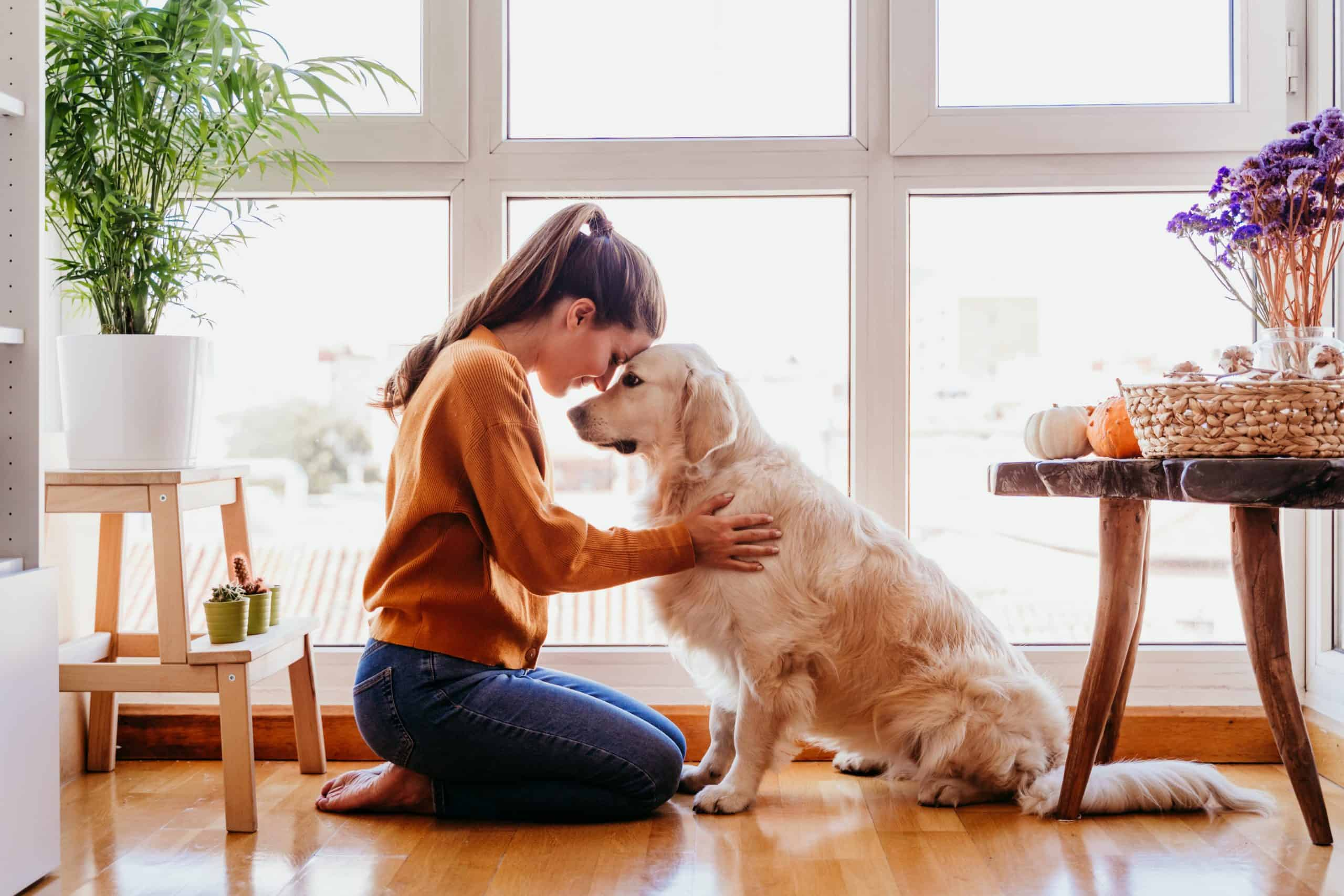 Woman cuddles with Golden Retriever. As a new dog owner, it's key to meet your dog's basic needs, including veterinary care, food, water, shelter, and toys.
