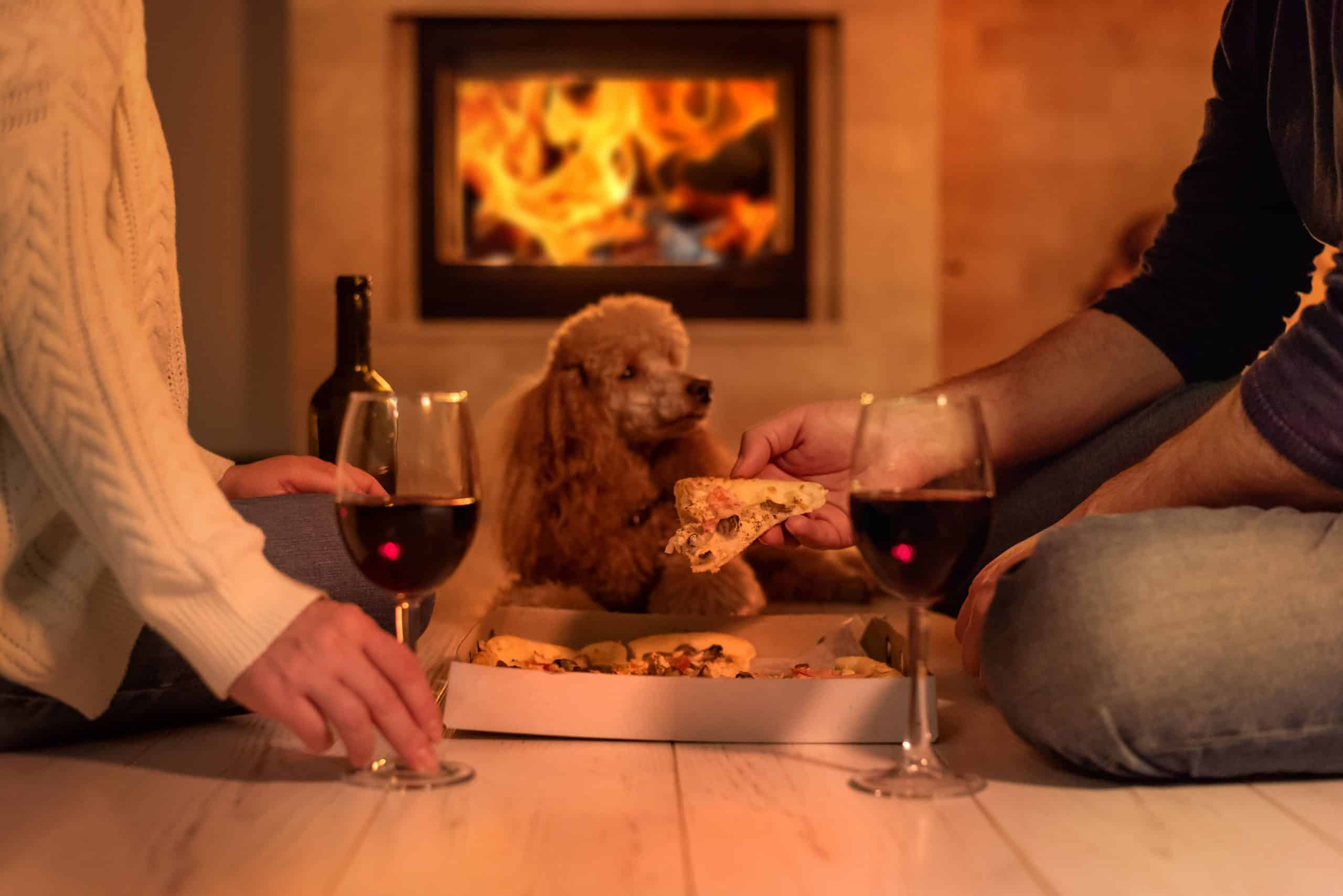 Poodle watches owners drink wine and eat pizza. Don't let your dog drink wine. Limited studies suggest that wine is just as toxic to dogs as grapes are.