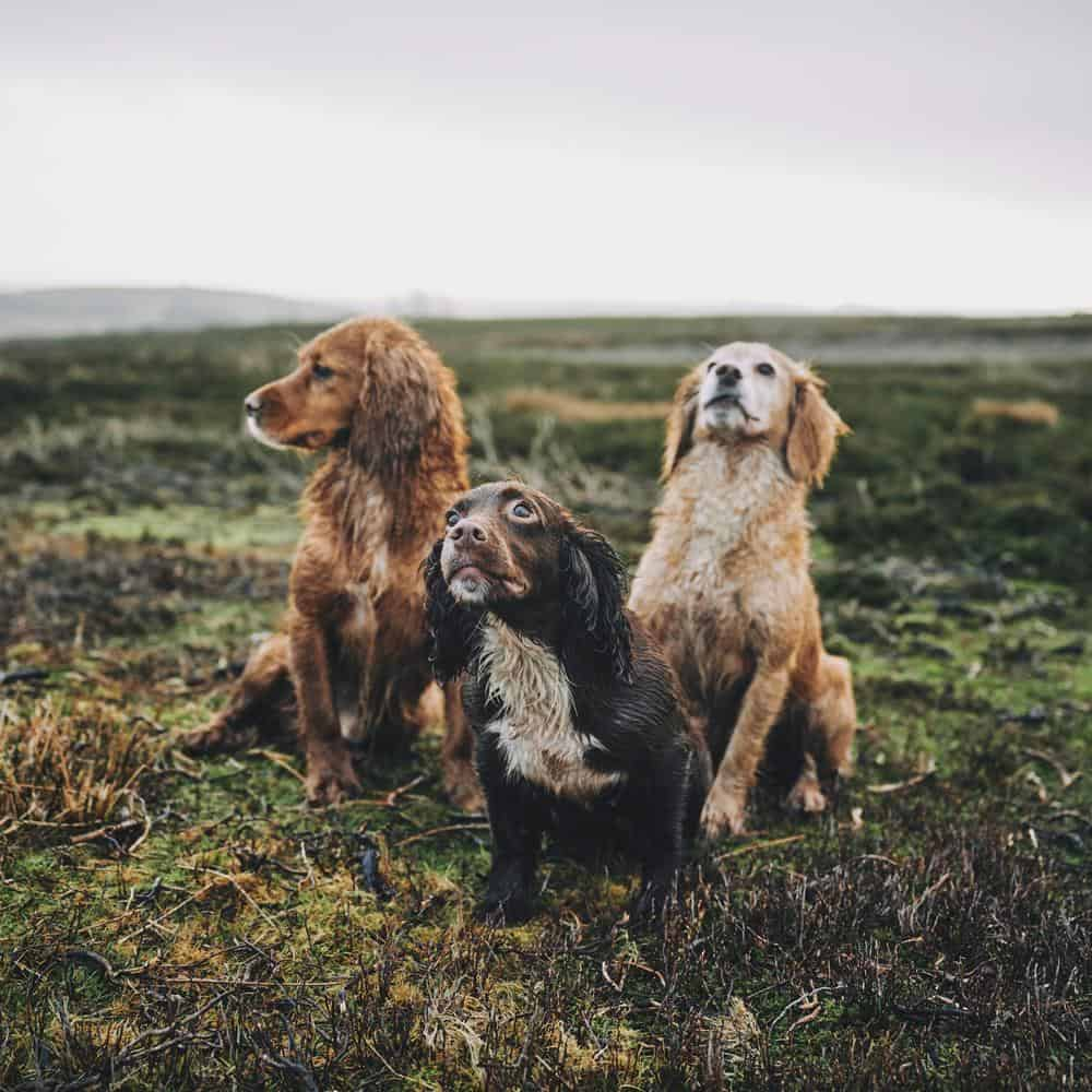 Three dogs outside. Clean up after your dog using eco-friendly poo bags.