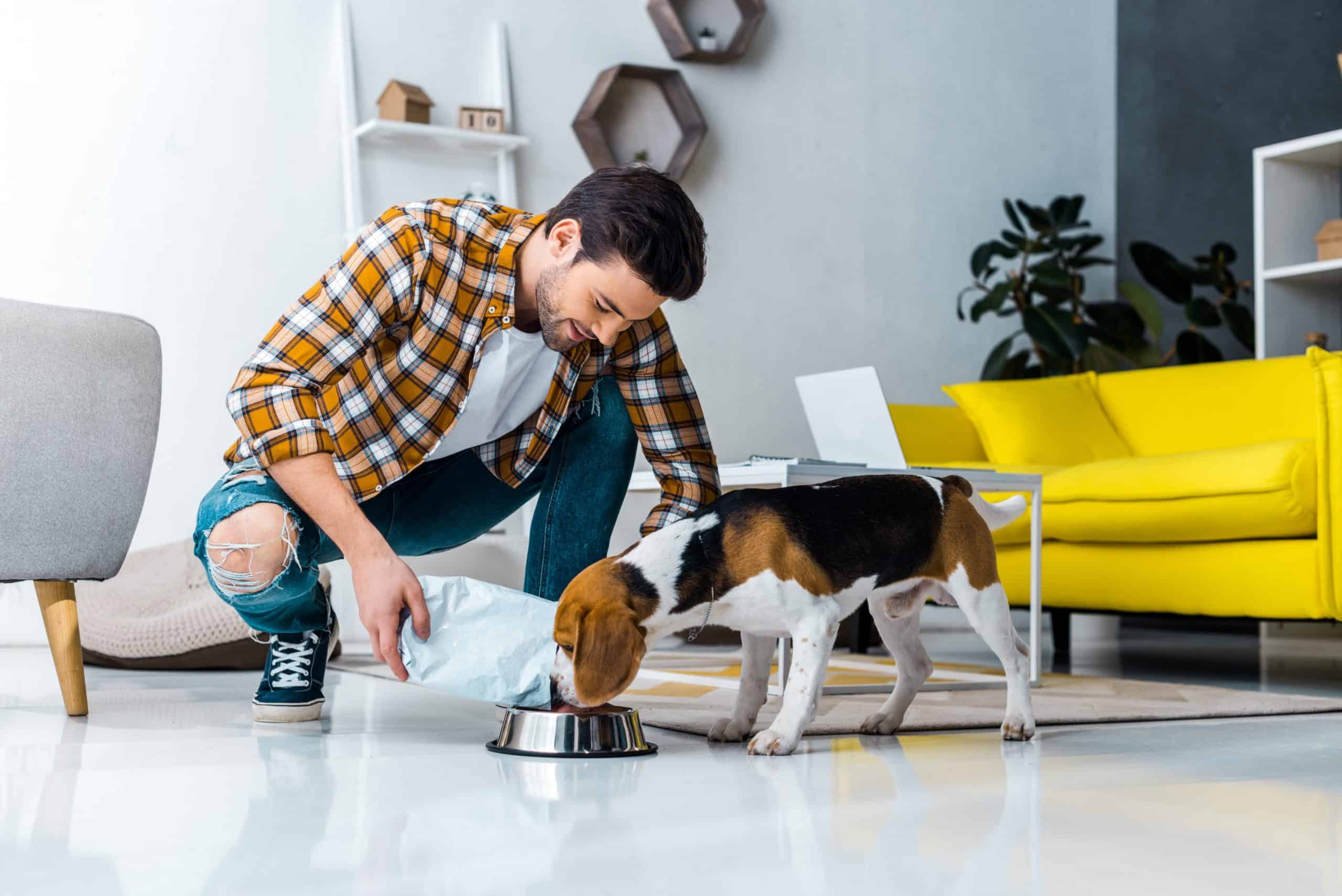 Man feeds beagle. Be aware of foods your dog should avoid eating because they are toxic and could potentially cause choking, weakness, or death.