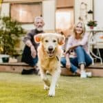Happy golden retriever plays in back yard. Get creative with these tips to turn your yard into a puppy paradise that you and your canine pal will never want to leave.