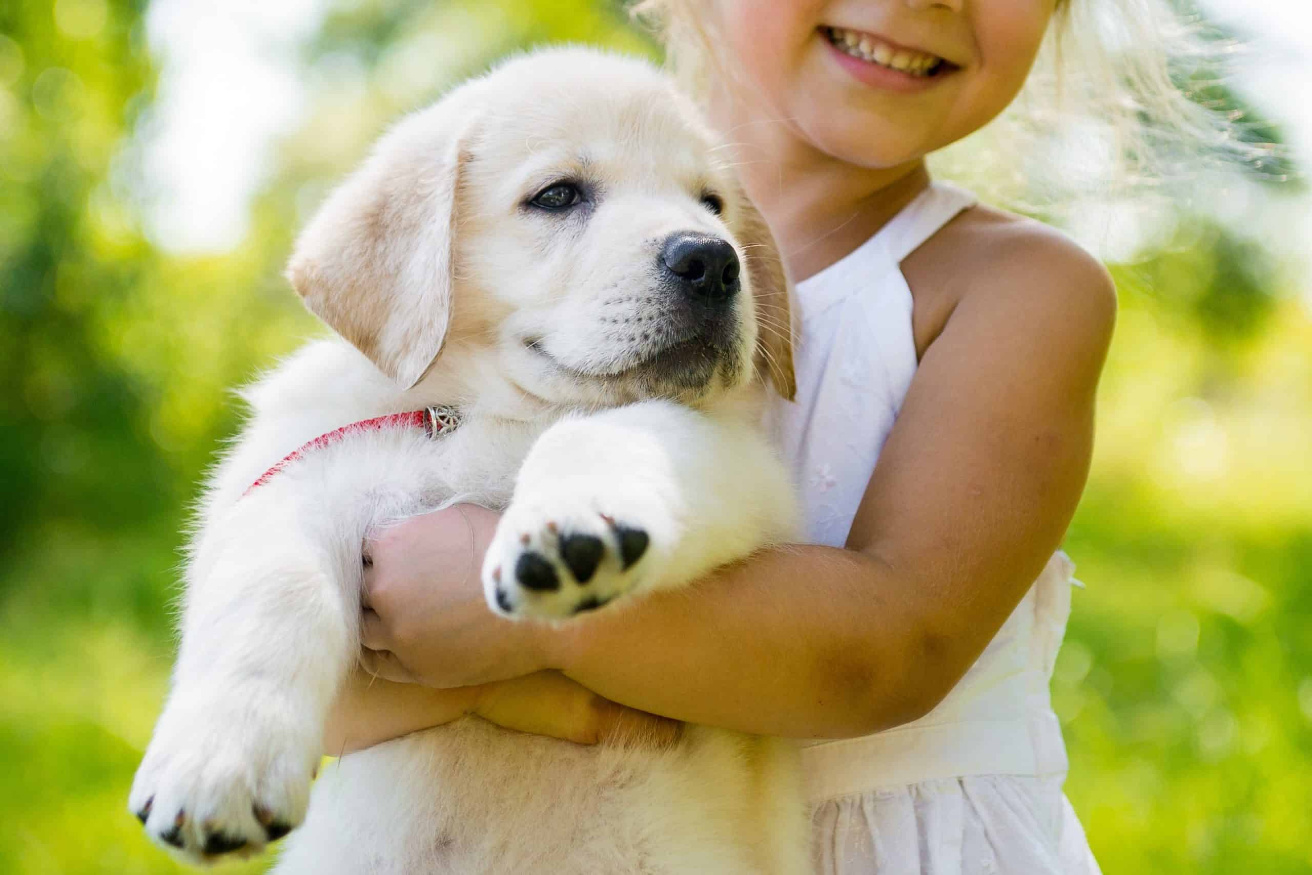 Little girl holds yellow Labrador retriever puppy. Before getting a dog, ask yourself if your family, especially one with young children, is ready for a pet.